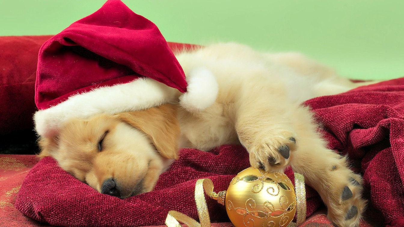 Christmas Puppy Wallpaper for Computer - WallpaperSafari