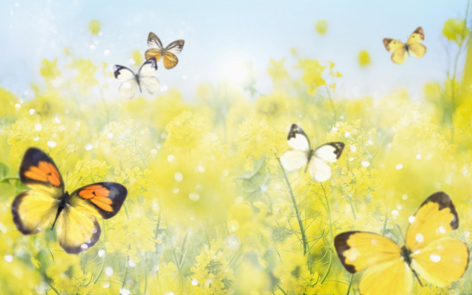wallpaper animated butterfly wallpaper animated butterfly wallpaper 1600x1000