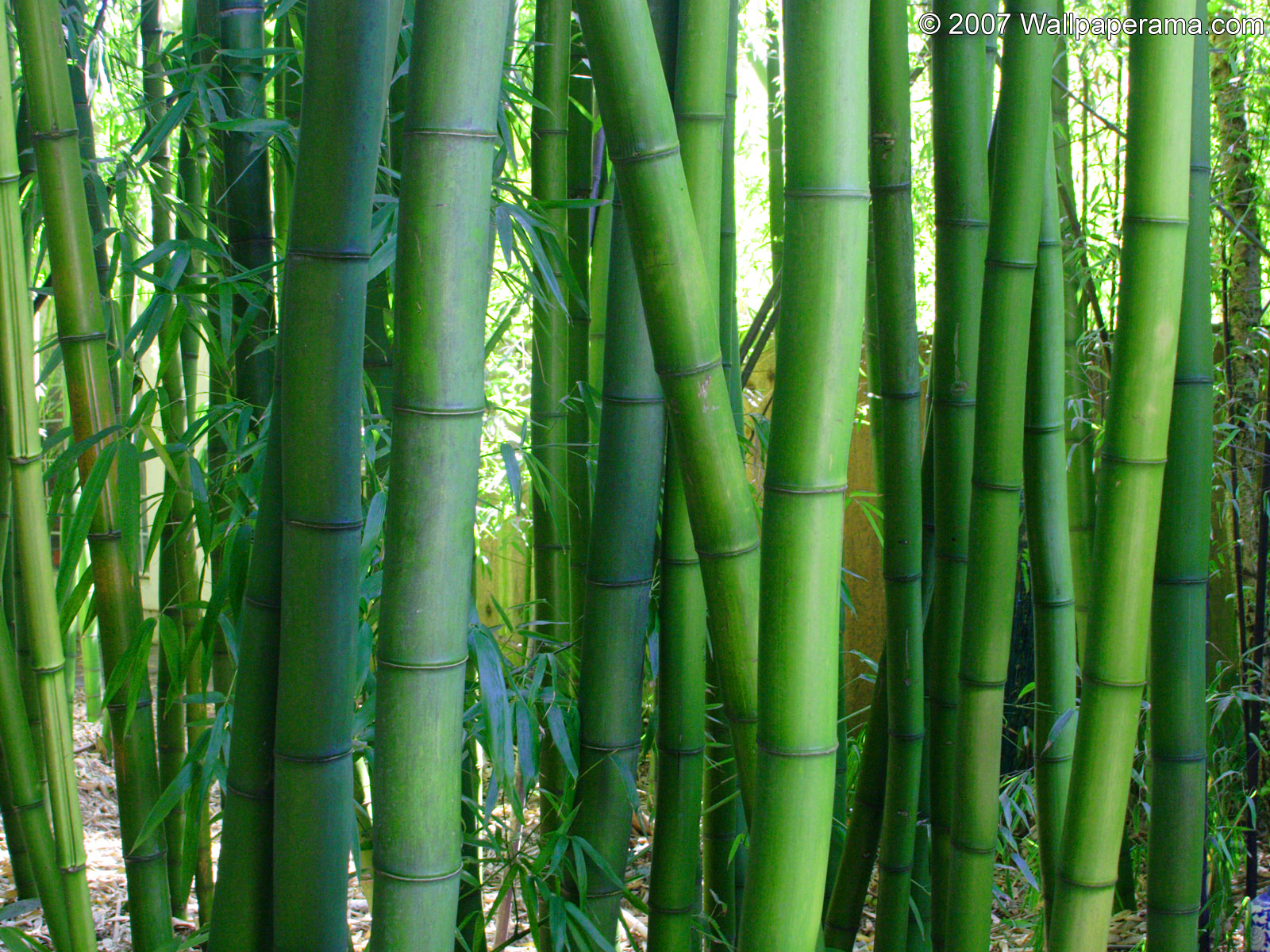 bamboo pictures wallpaper