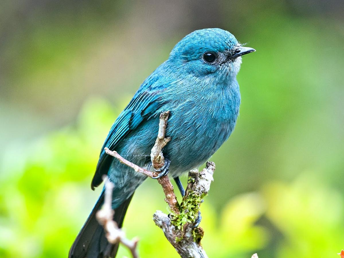 BLUE BIRD WALLPAPER   72628   HD Wallpapers   [desktopinHQcom] 1200x900