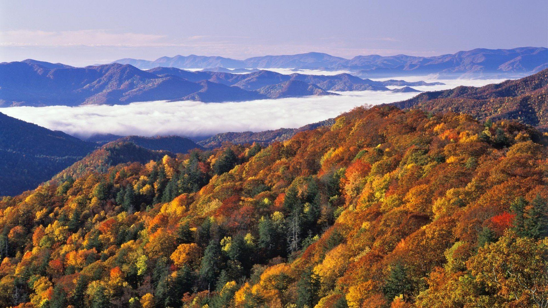 35 Great Smoky Mountains Fall Wallpapers   Download at WallpaperBro 1920x1080