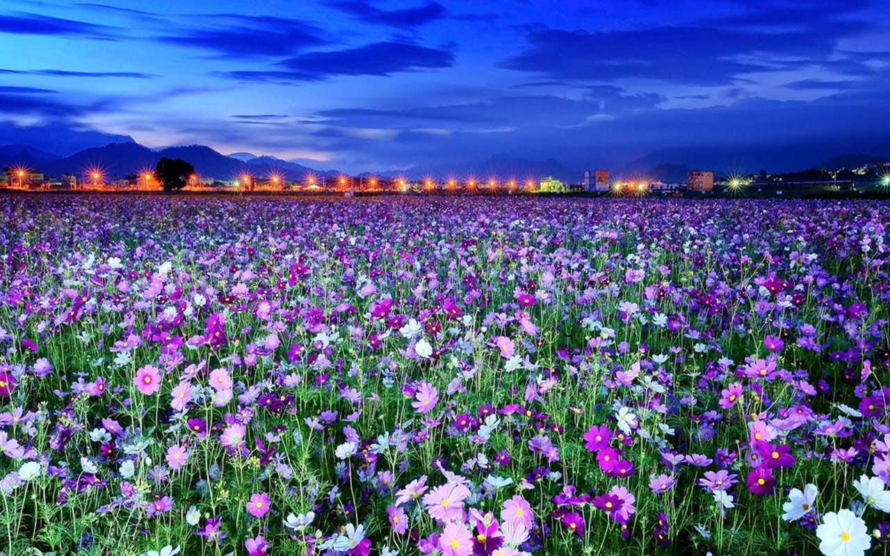 different types of flower wallpapers Odd Wallpapers 1280x800