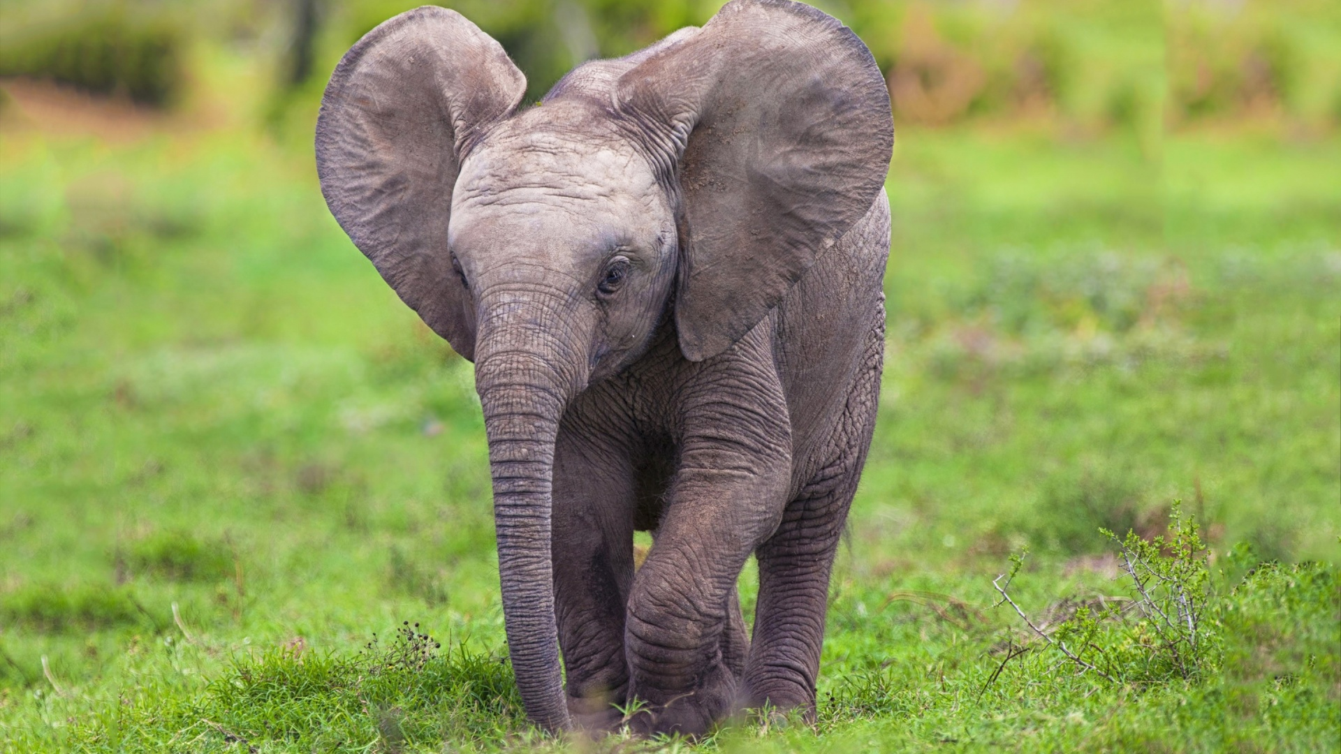 Elephant Baby   High Definition Wallpapers   HD wallpapers 1920x1080