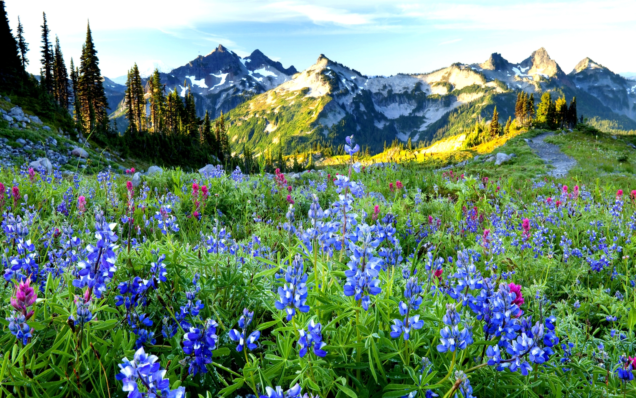 Desktop Spring Flowers Mountains 2560x1600