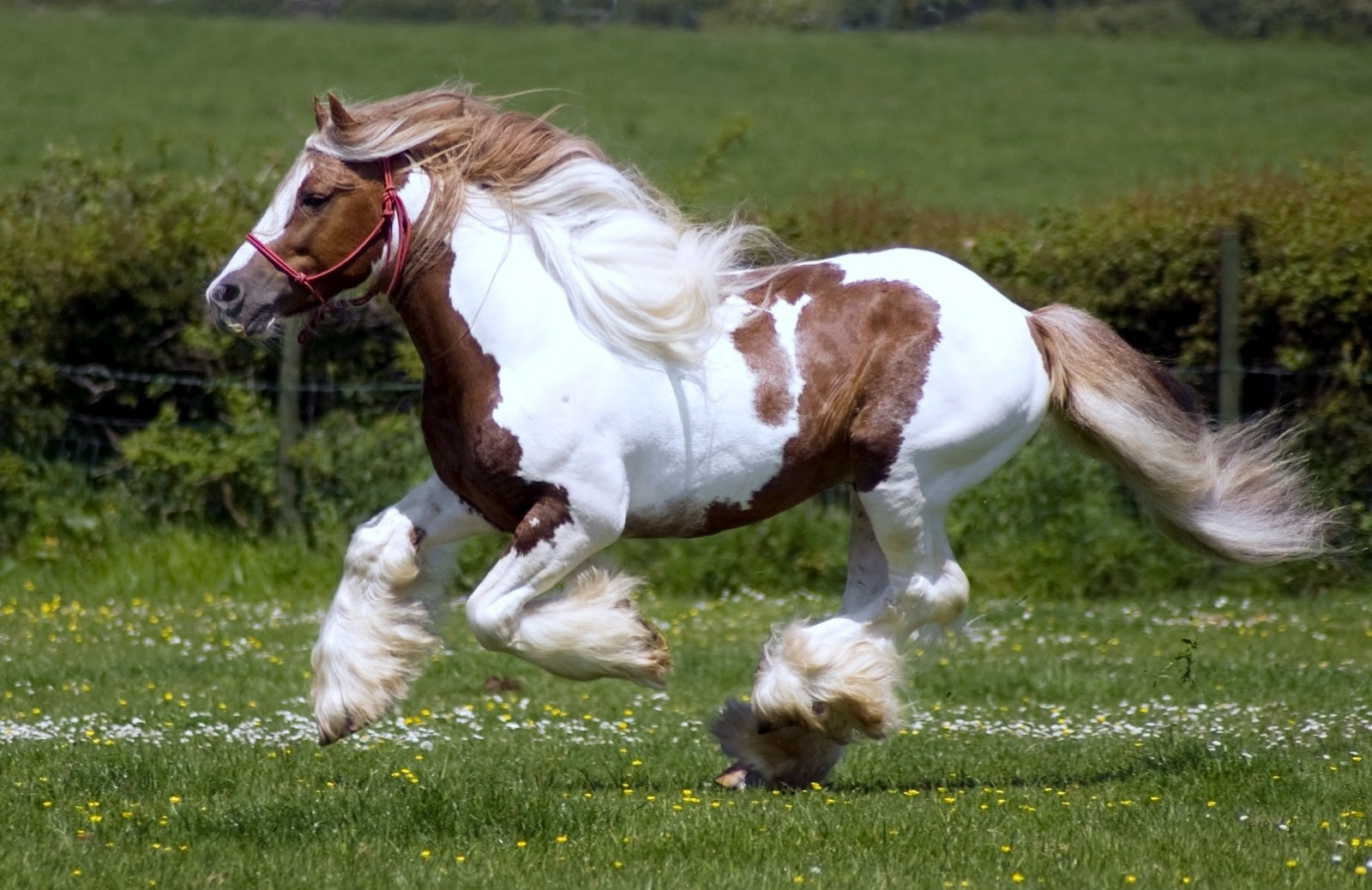 Free Download Horse Wallpaper Arabian Horse Wallpaper Beautiful