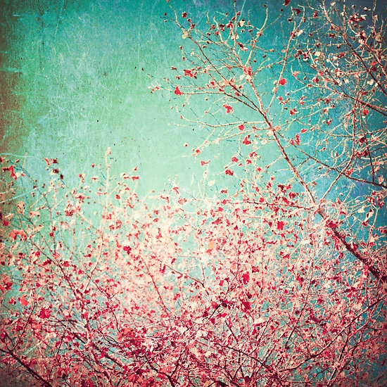The Texture Of Teal And Turquoise: [48+] Red And Teal Wallpaper On WallpaperSafari