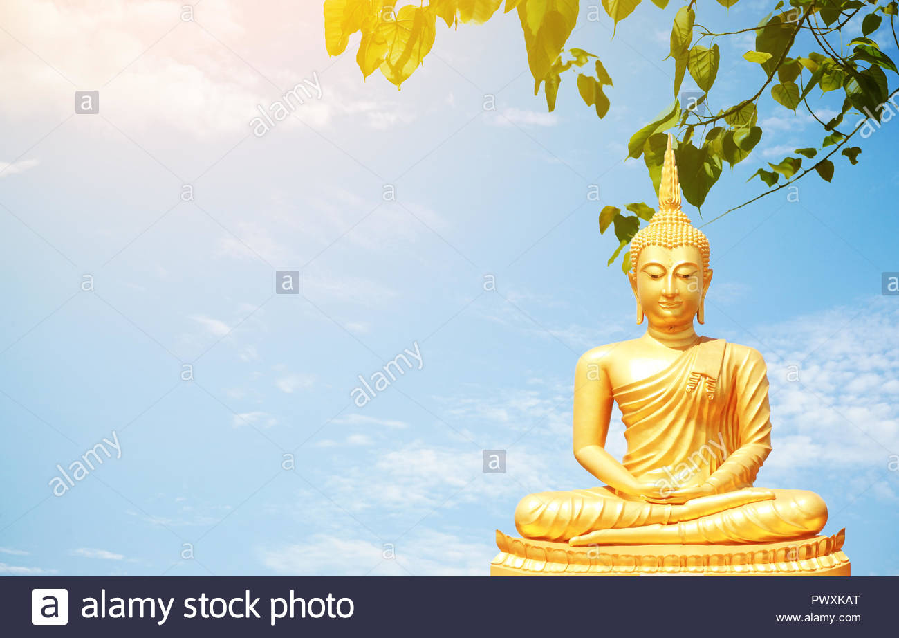 The golden Buddha statues sitting under Bo leaf and bluesky 1300x922