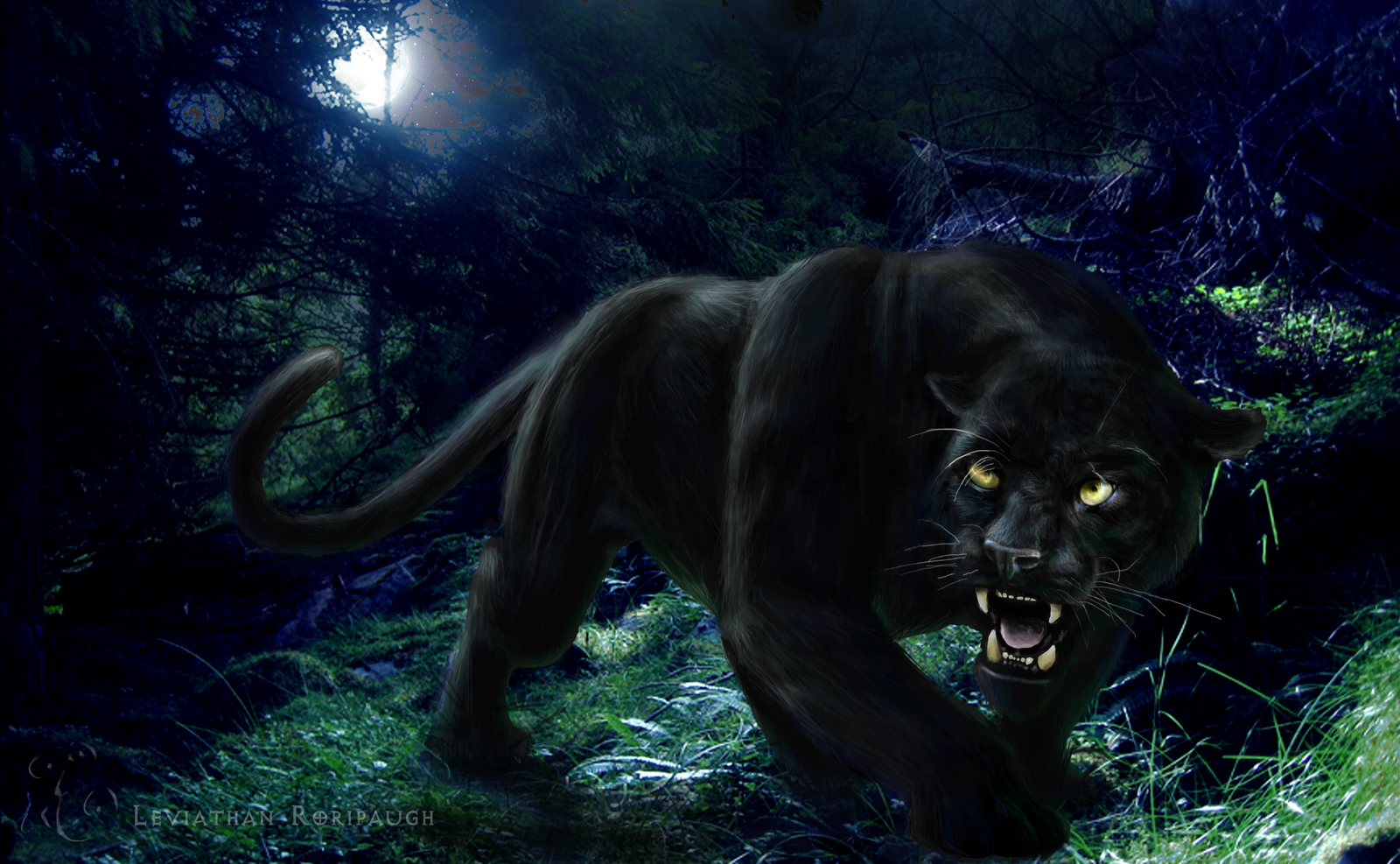 Black Panther HD Wallpapers Wild Animal 1600x987