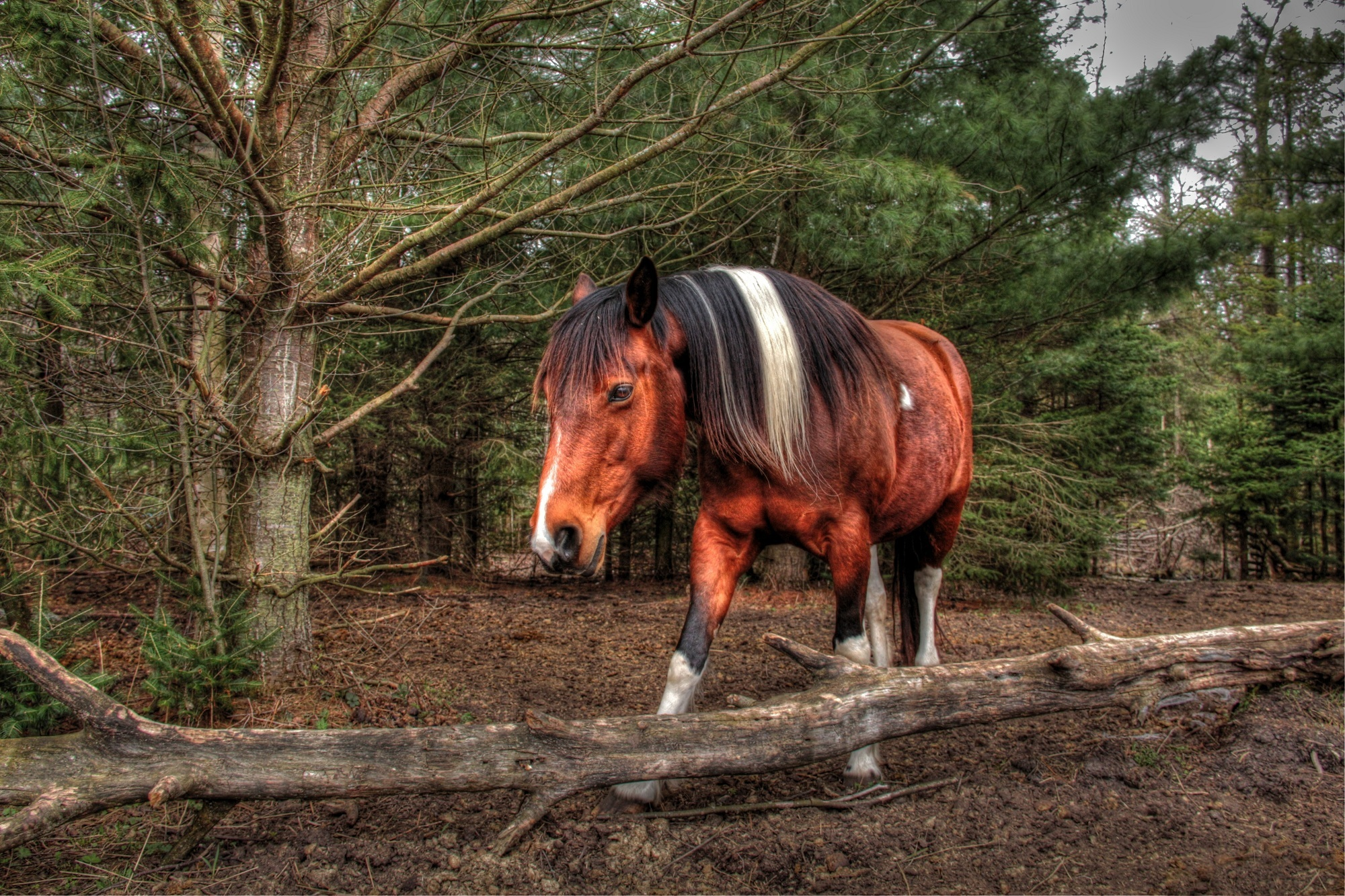 Wallpaper horse horse muzzle mane forest wallpapers animals 1680x1050