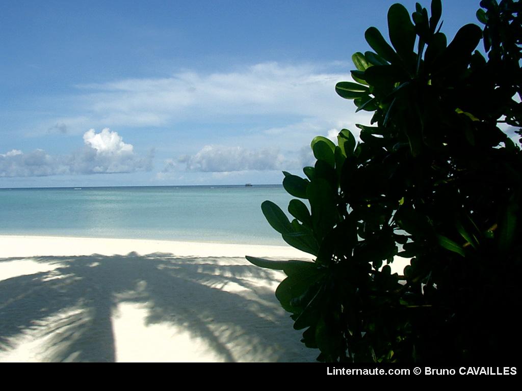 laguna beach wallpaper   wwwhigh definition wallpapercom 1024x768