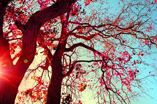 pink tree on Tumblr 500x333