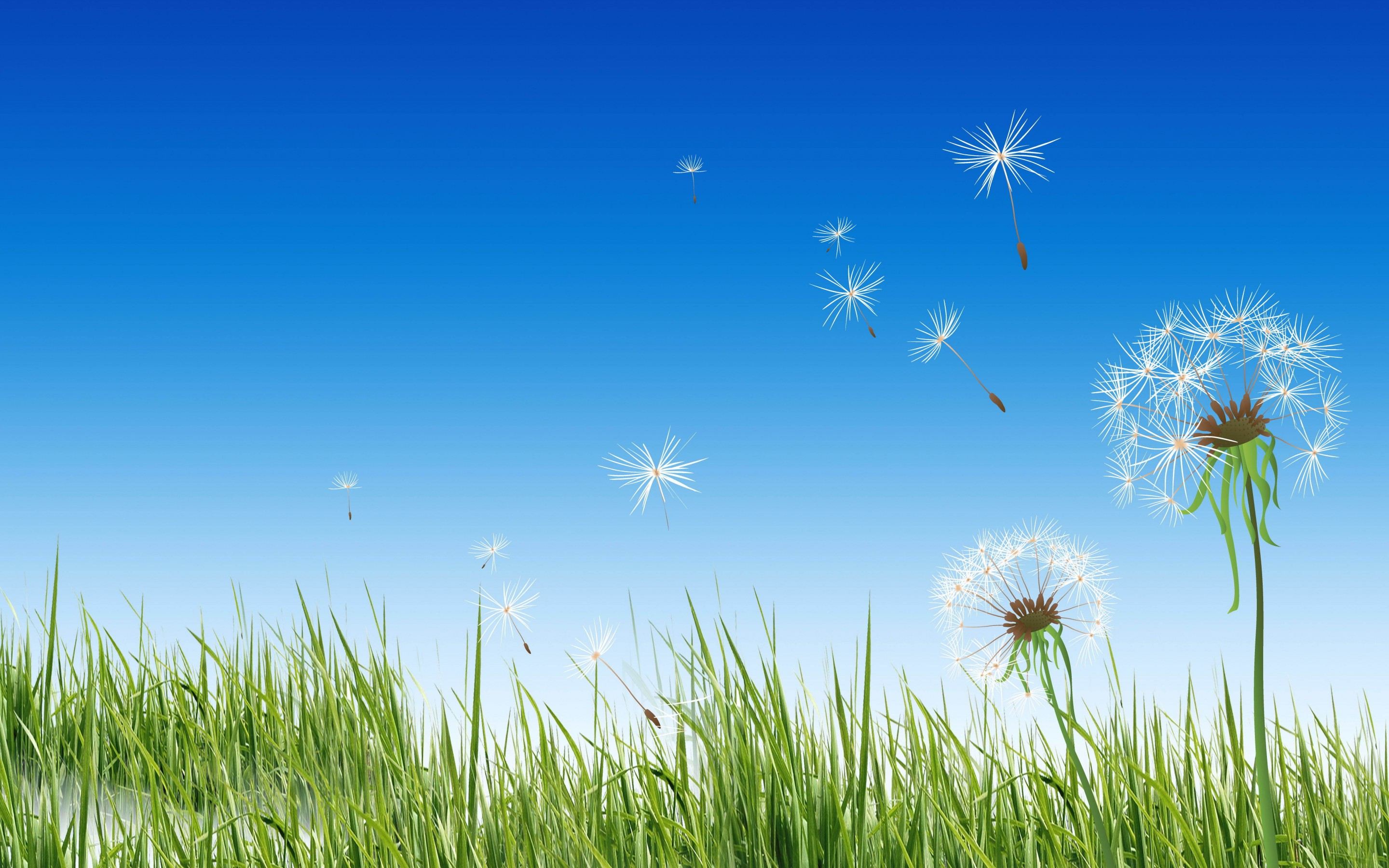 Dandelion Computer Wallpapers Desktop Backgrounds 2880x1800 ID 2880x1800