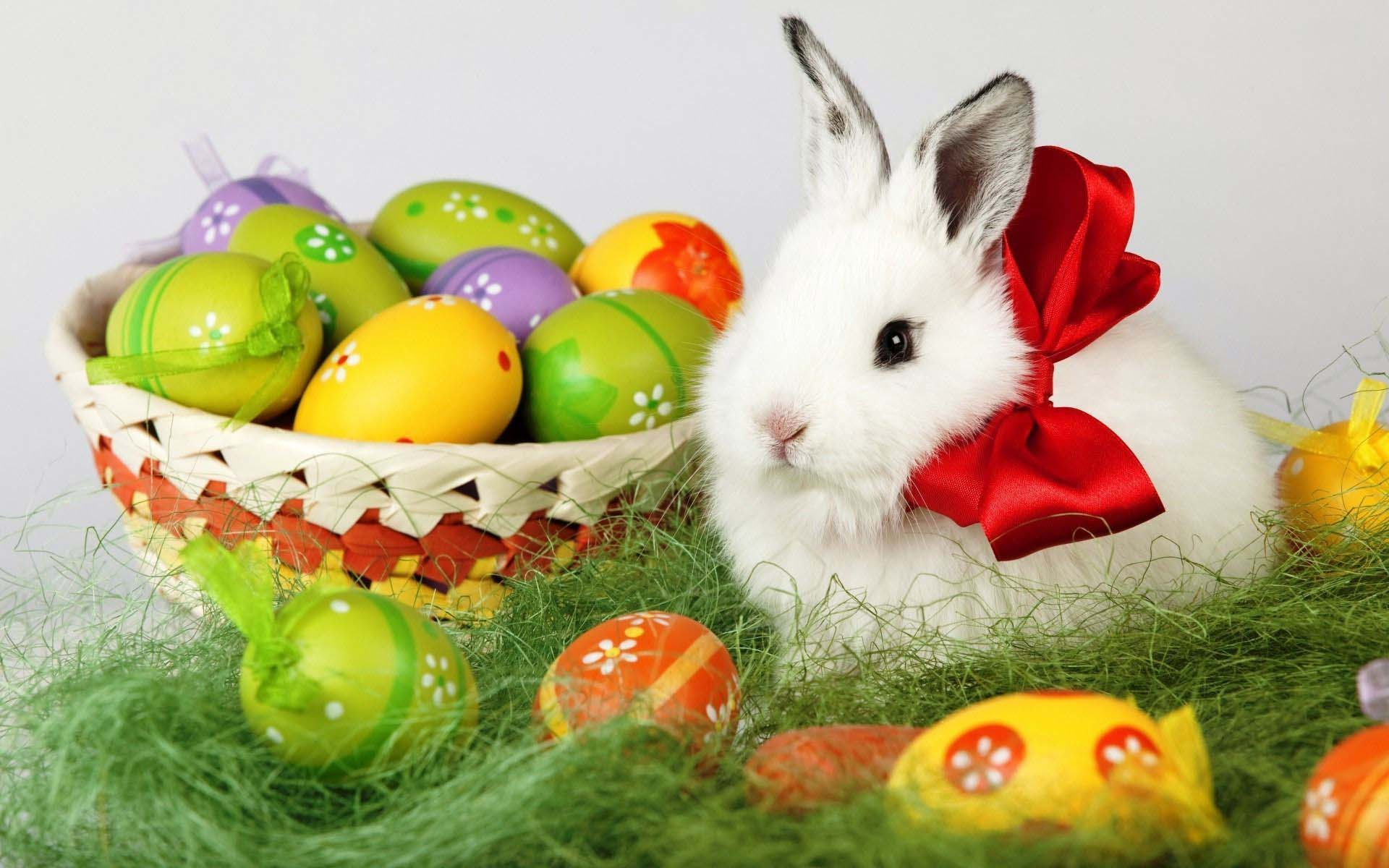 Easter Bunny Wallpapers HD 1920x1200