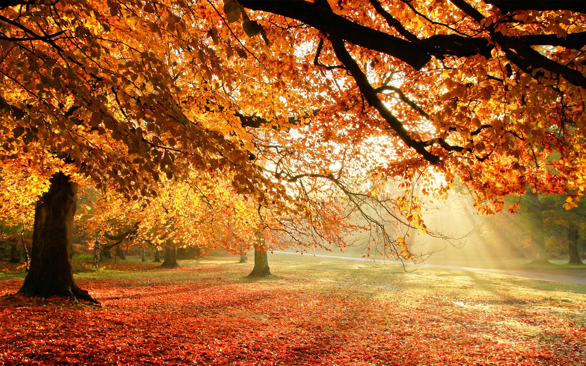 Autumn Trees Sun Light HD Wallpapers 1920x1200