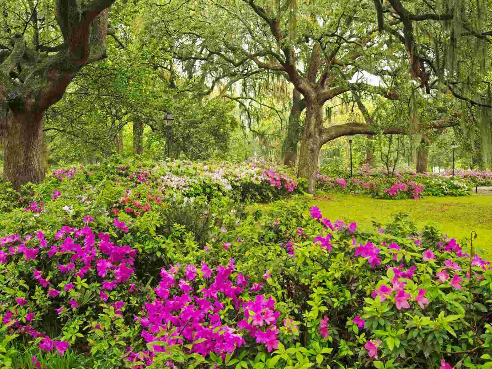 Savannah Georgia wallpaper   Flowers   Nature   Wallpaper Collection 1600x1200