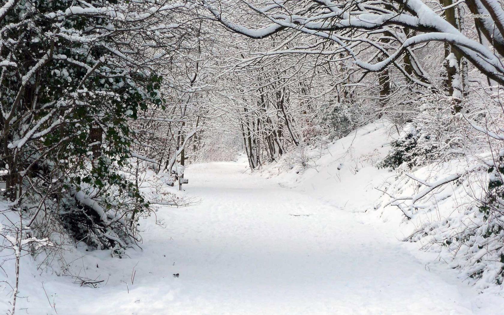 Snowy forest wallpaper 1280x800 Snowy forest wallpaper 1366x768 Snowy 1680x1050