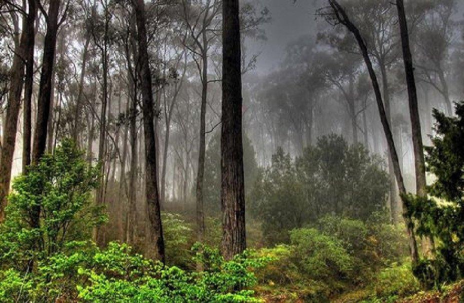 Foggy forest wallpaper   ForWallpapercom 927x606