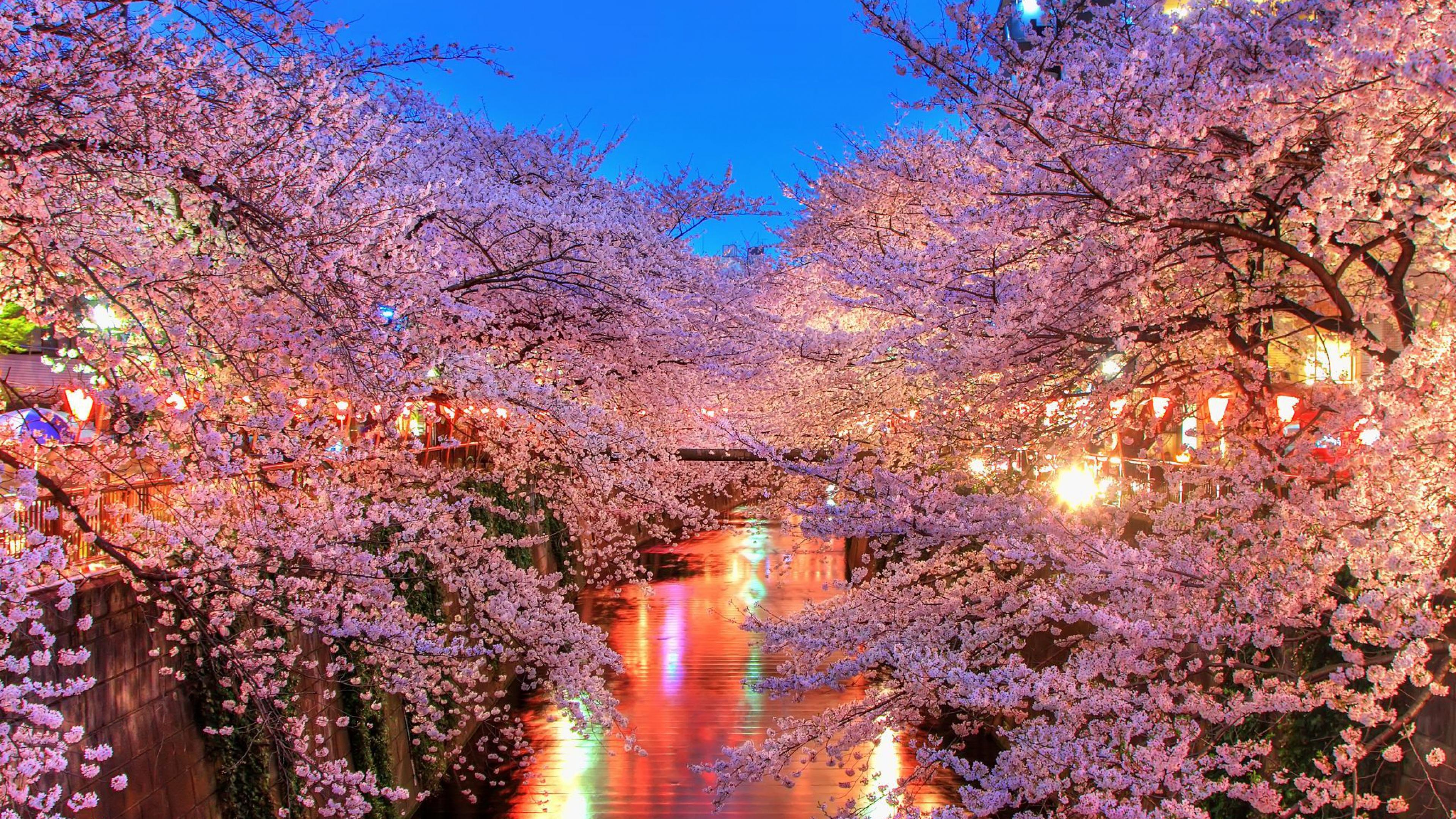Download Wallpaper 3840x2160 O hanami Blossom Sakura Japan 4K Ultra 3840x2160