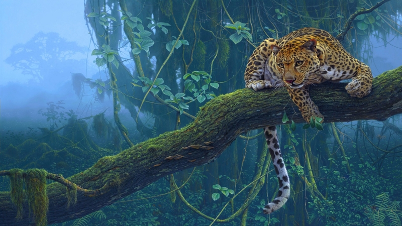 3635 Category Animals Hd Wallpapers Subcategory Cats Hd Wallpapers 800x450