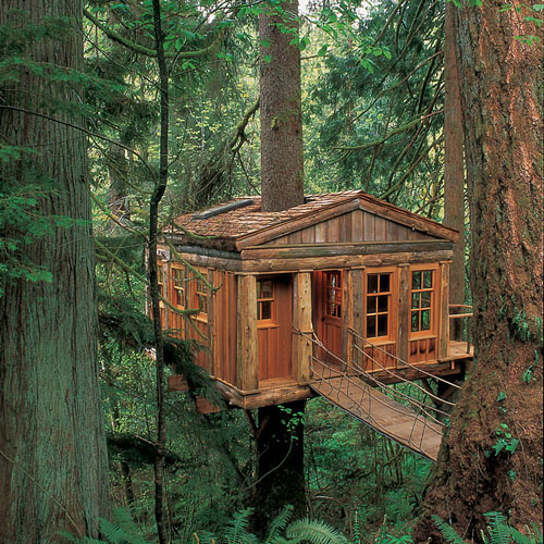 Amazing Tree House Wallpapers 500x500