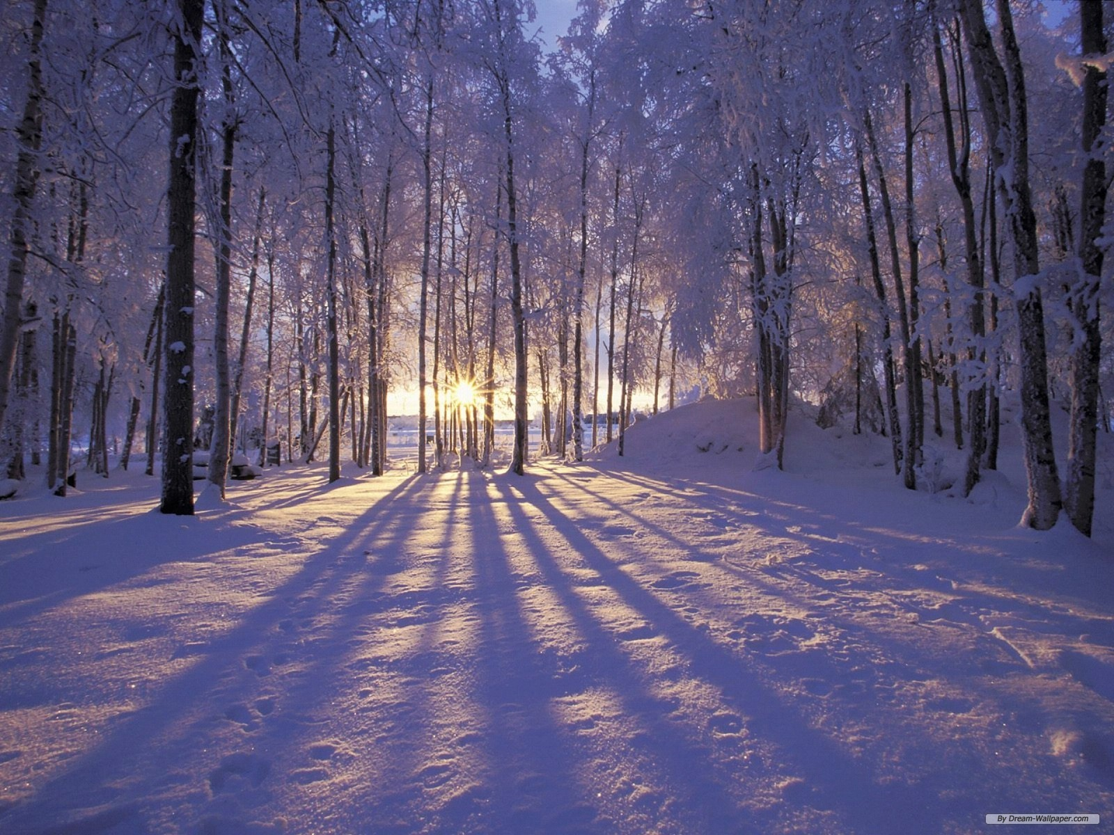 screensavers Wallpaper Nature wallpaper Winter Wonderland 1 1600x1200