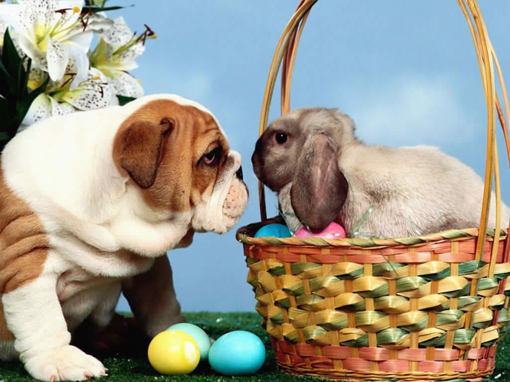 Cute Easter Wallpaper 1024x768