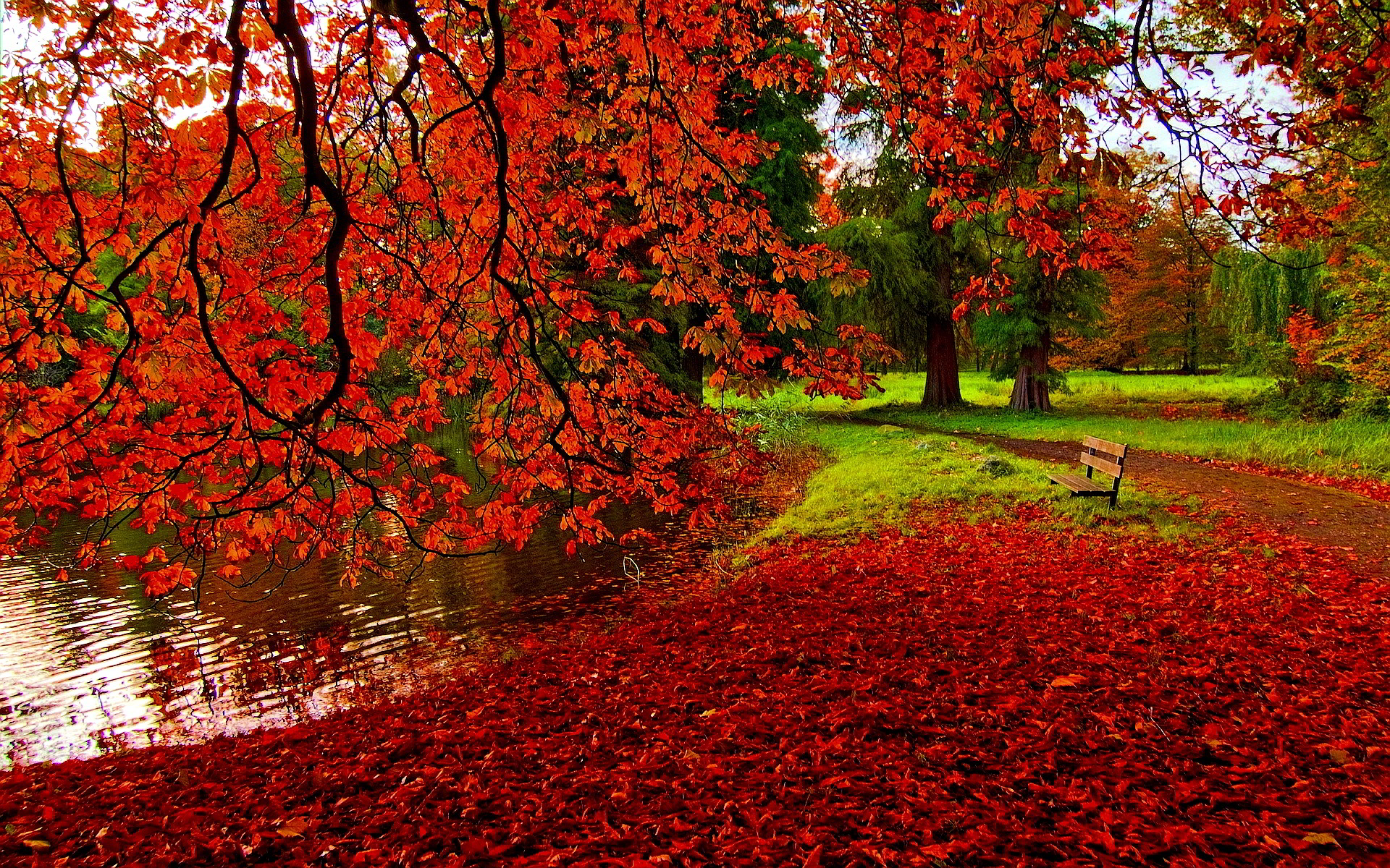 fall color wallpaper widescreen With Resolutions 1920×1200 Pixel