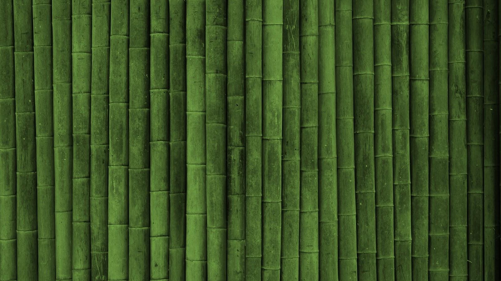 Beautifull Bamboo Green Wall HD Wallpapers Epic Desktop Backgrounds 1600x900