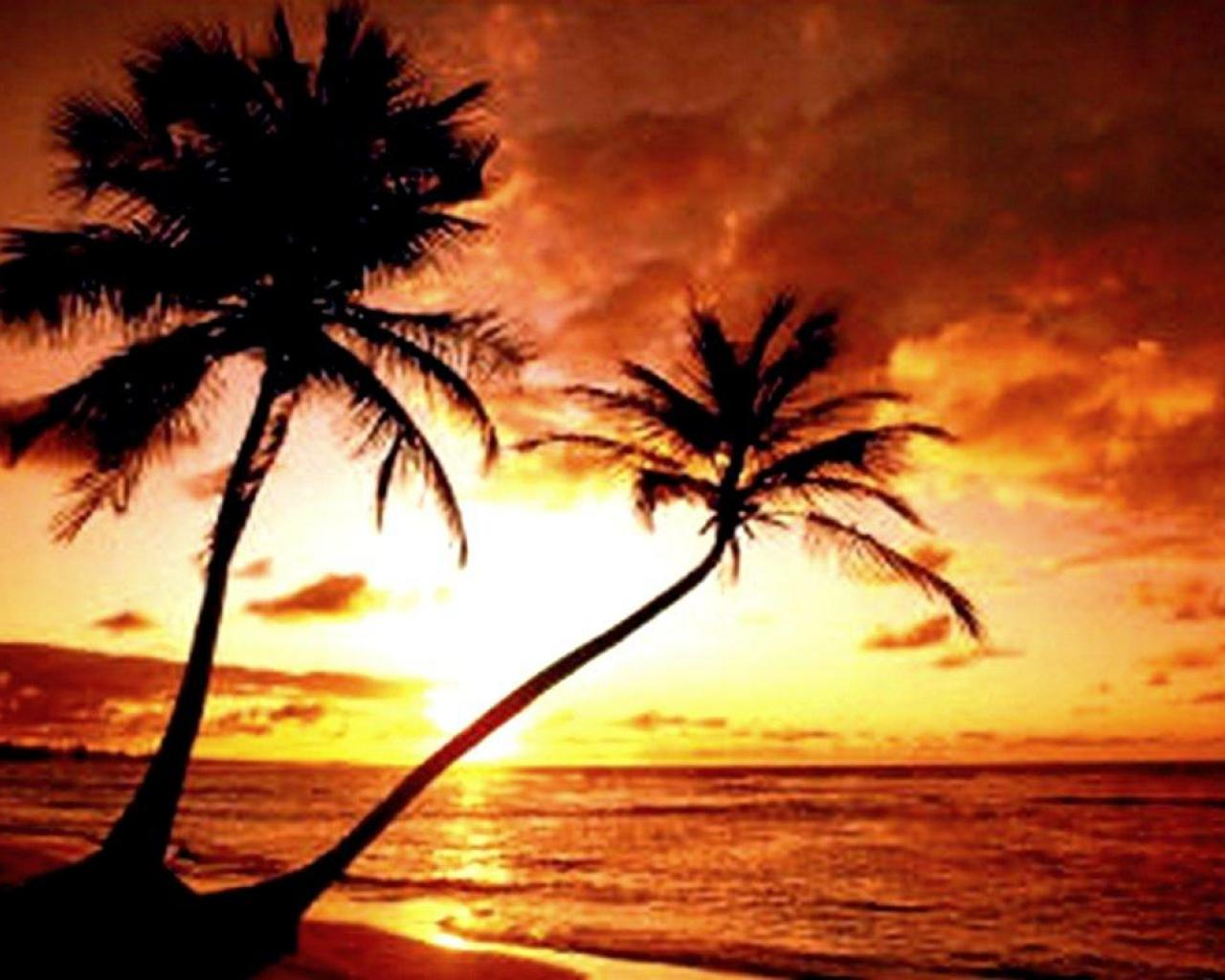 TROPICAL BEACH SUNSET WALLPAPER   23482   HD Wallpapers 1280x1024
