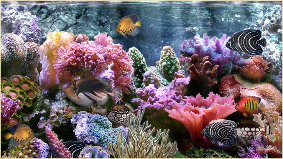 Colorful Coral Reef Wallpaper - WallpaperSafari | 960 x 540 jpeg 184kB
