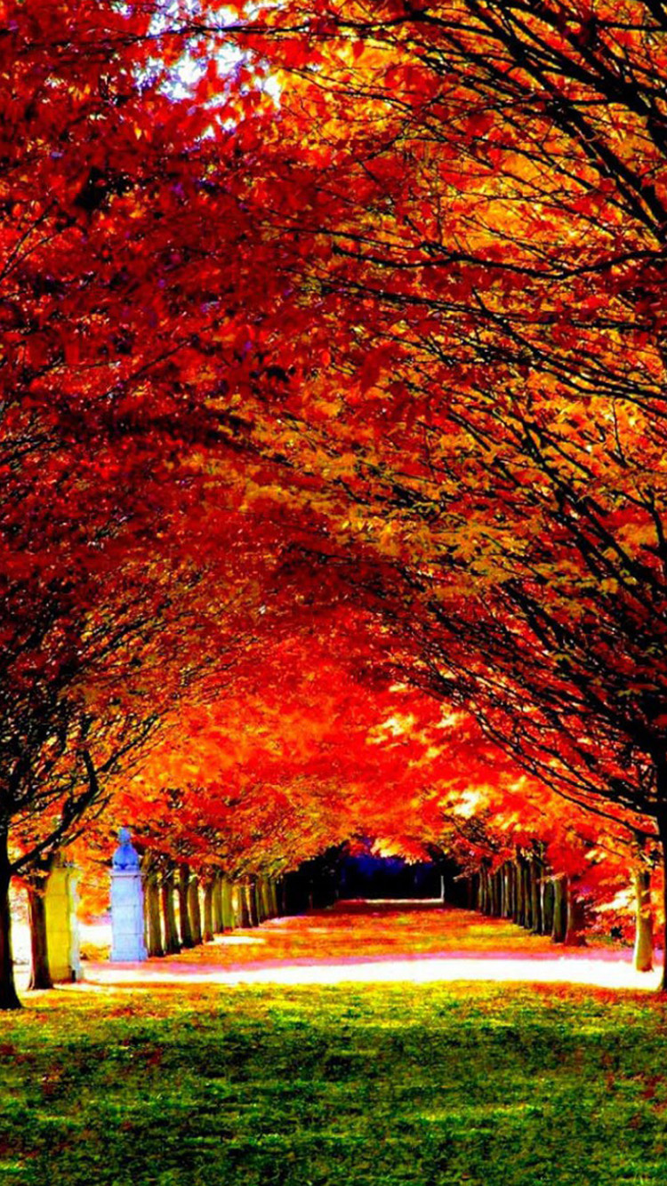 Iphone 6 autumn wallpaper wallpapersafari for Where can i purchase wallpaper