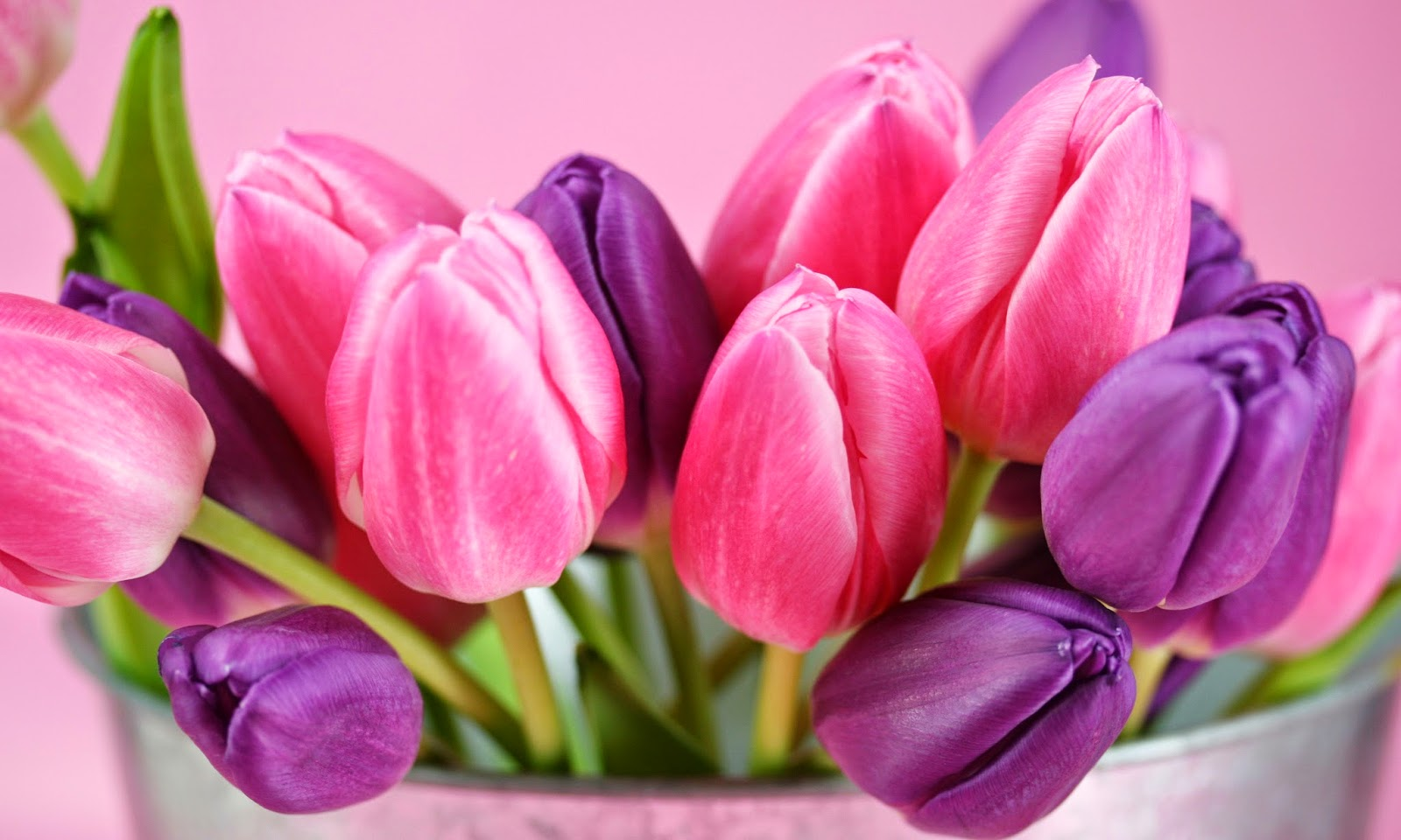 Tulips HD Wallpapers Download HD Wallpapers High Definition 1600x960