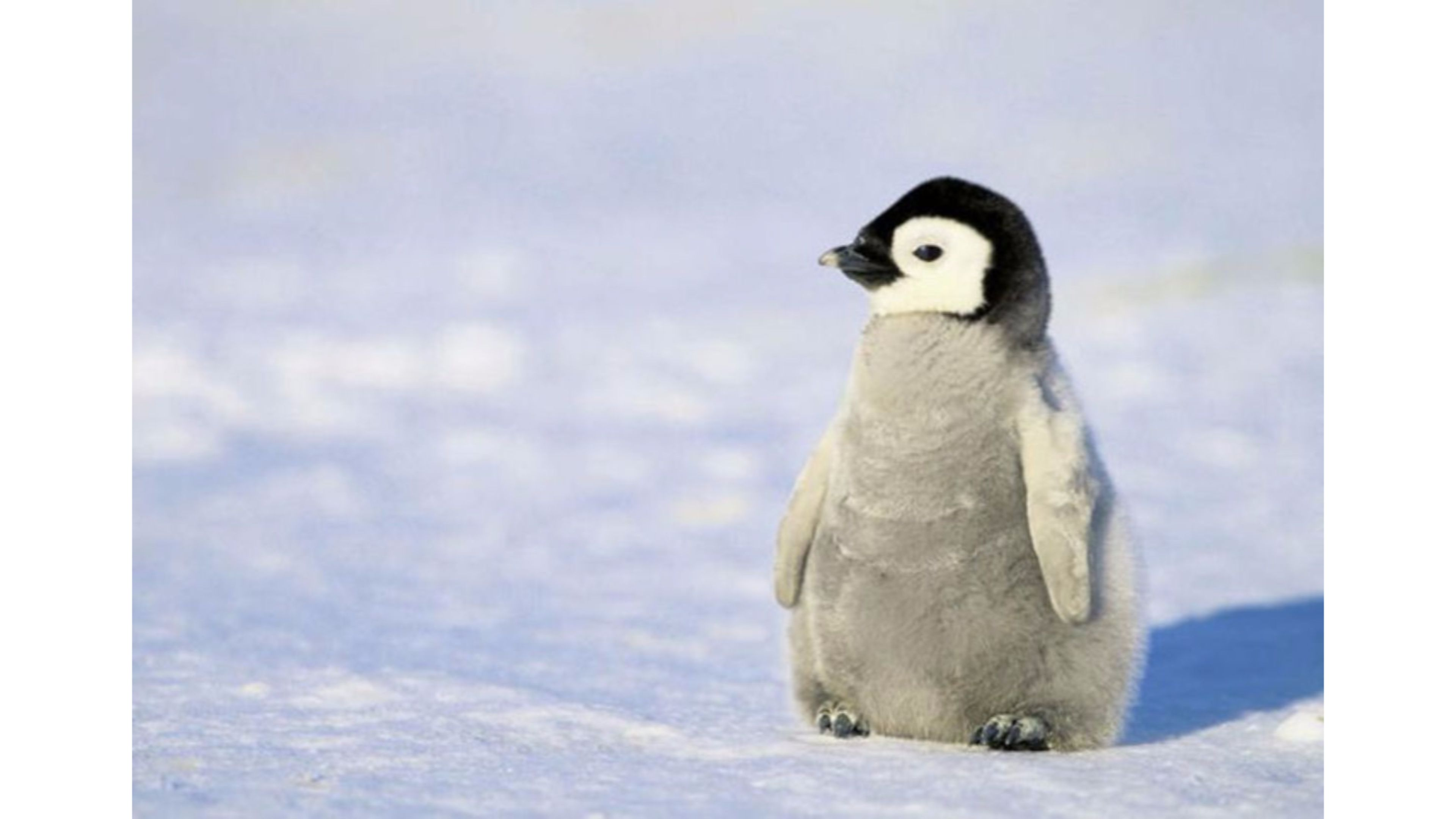 55 Penguin Wallpapers   Download at WallpaperBro 3840x2160