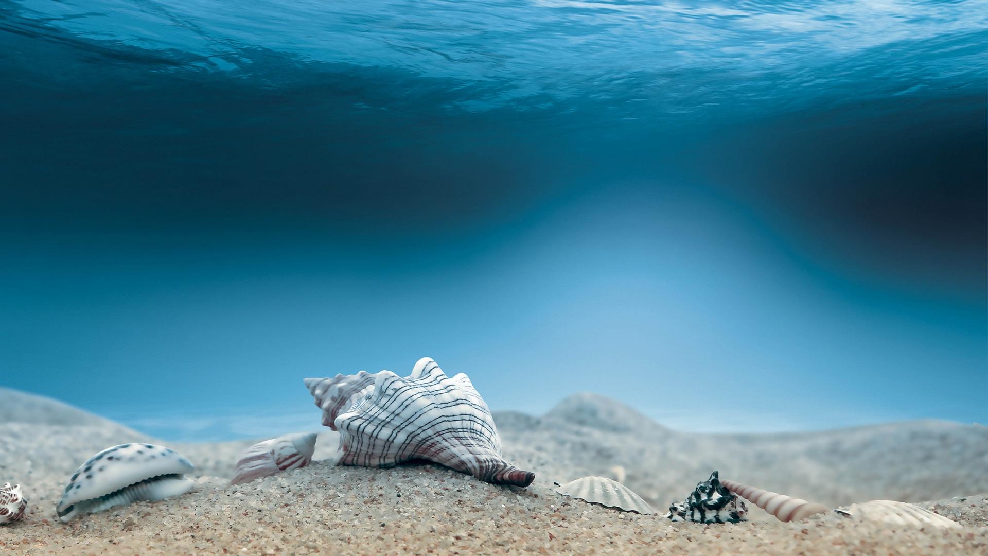 art ocean sea water underwater shells sand wallpaper background 1920x1080