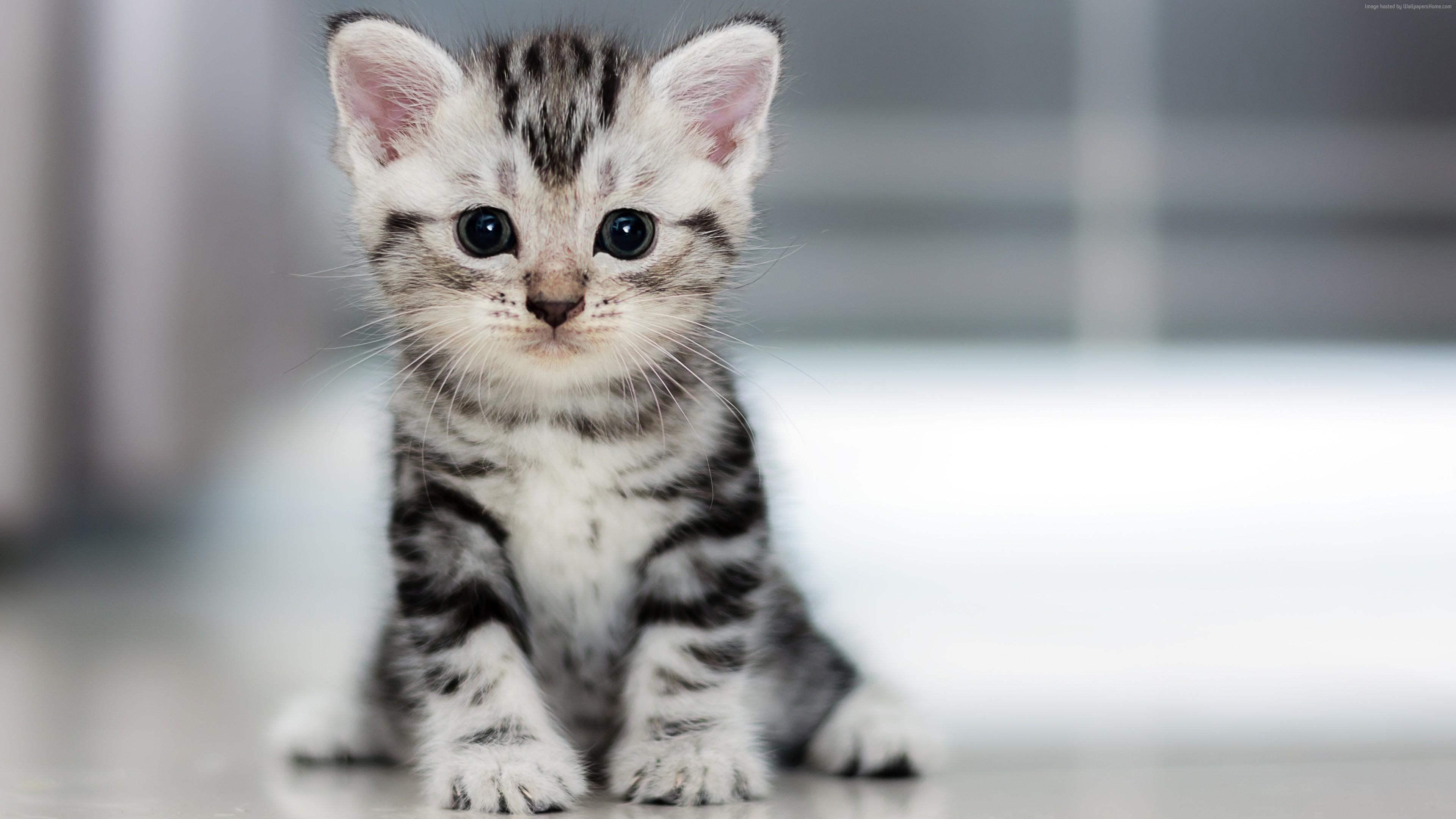 Wallpaper Kitten Cat cute 4K Animals Wallpaper Download   High 3840x2160