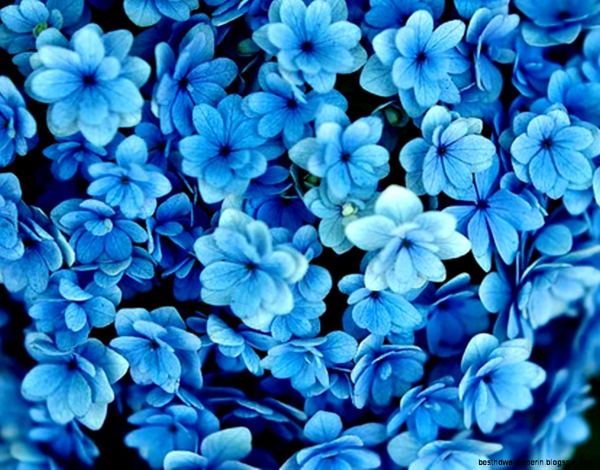 Blue Floral Background Hd