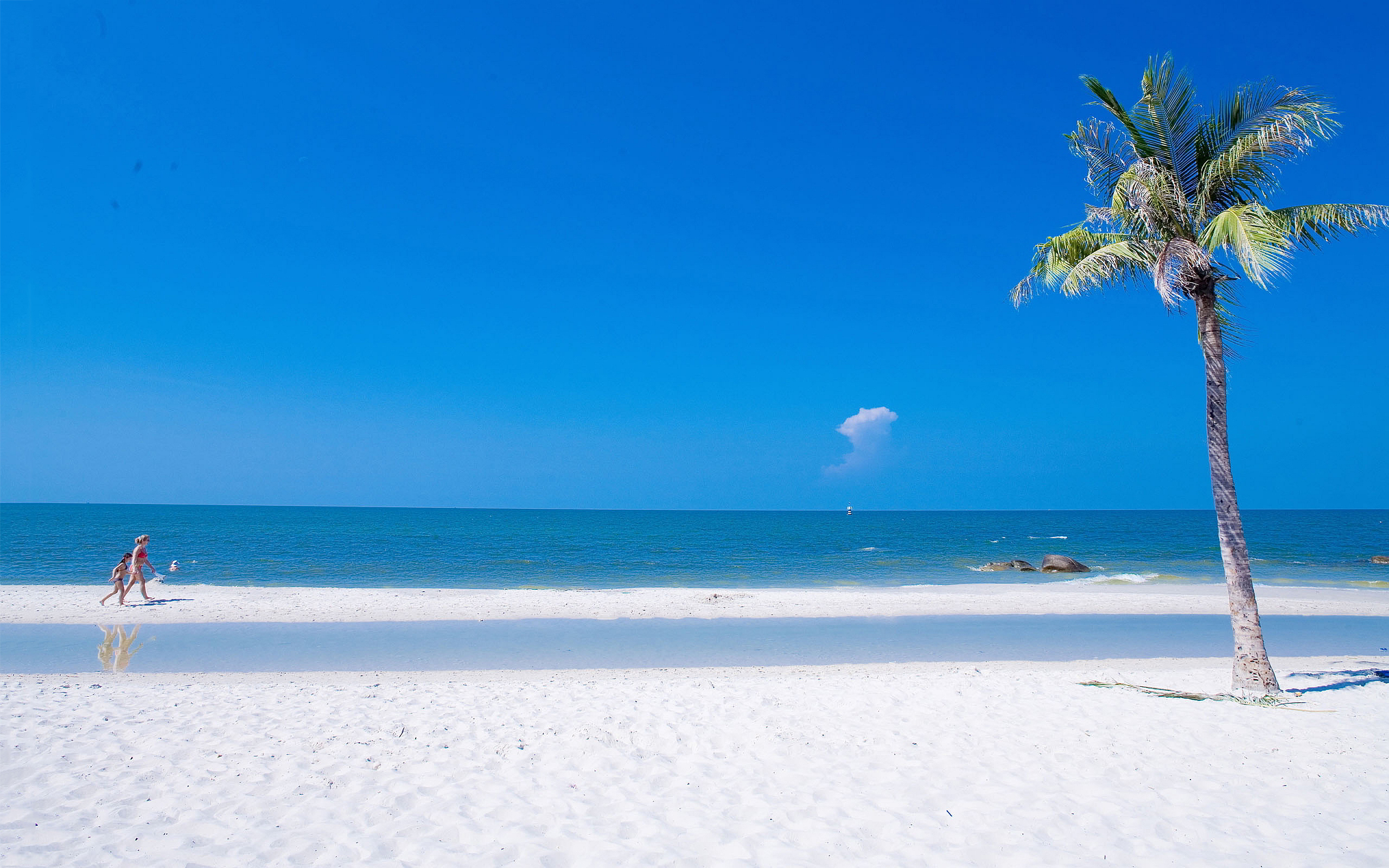 Beach Summer Ocean Wallpaper Full HD ImageBankbiz 2560x1600
