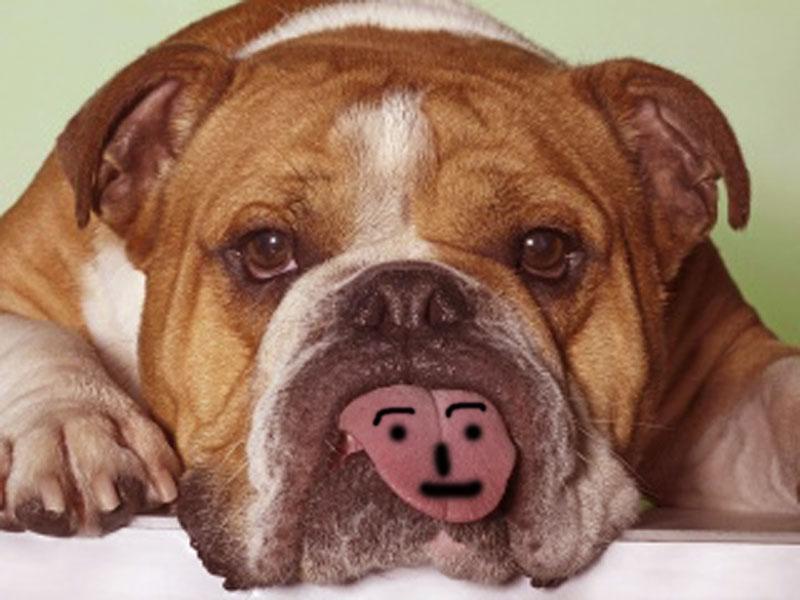 Funny Dog WallpapersComputer Wallpaper Wallpaper Downloads 800x600