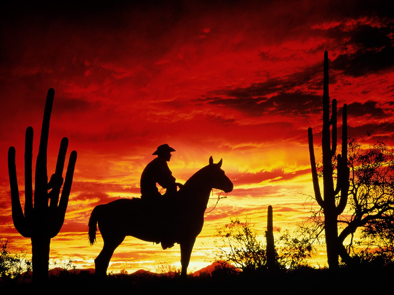 Cowboy   Cool Backgrounds and Wallpapers for your Desktop Or 1600x1200