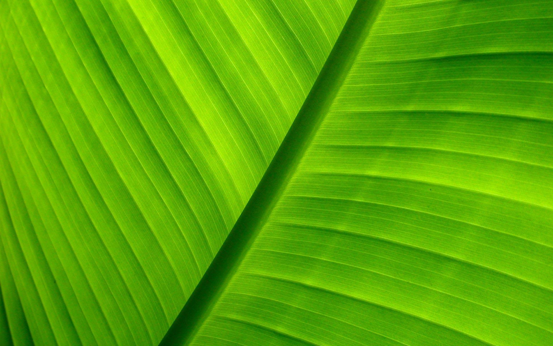 Green Background wallpaper   432774 1920x1200