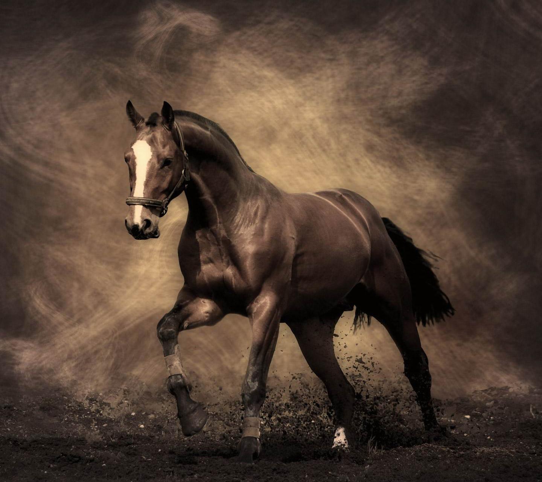 fine horse 1440x1280 Screensaver wallpaper 1440x1280