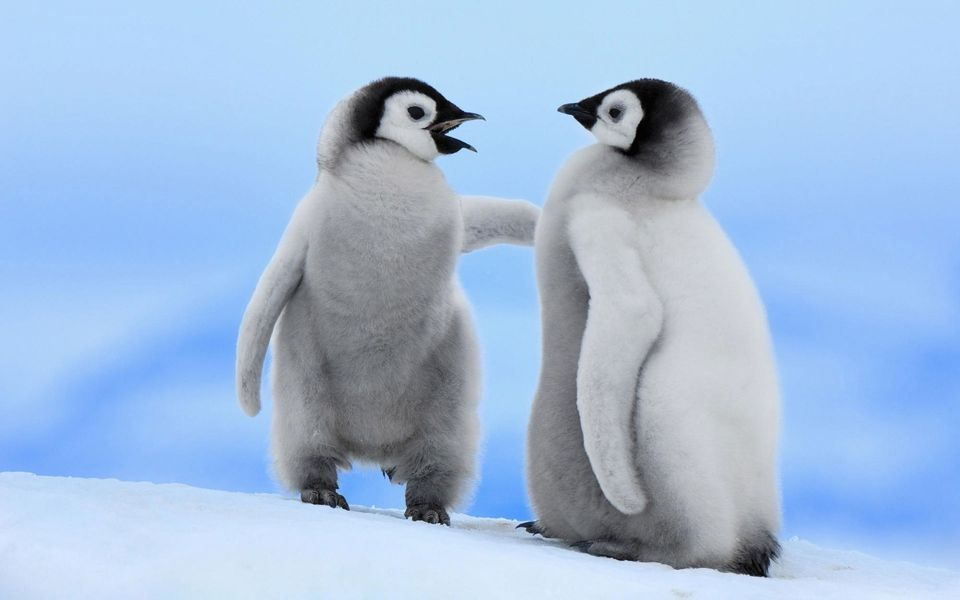 12 Baby Animals Who Are Excited for Winter Too Cute Baby 960x600
