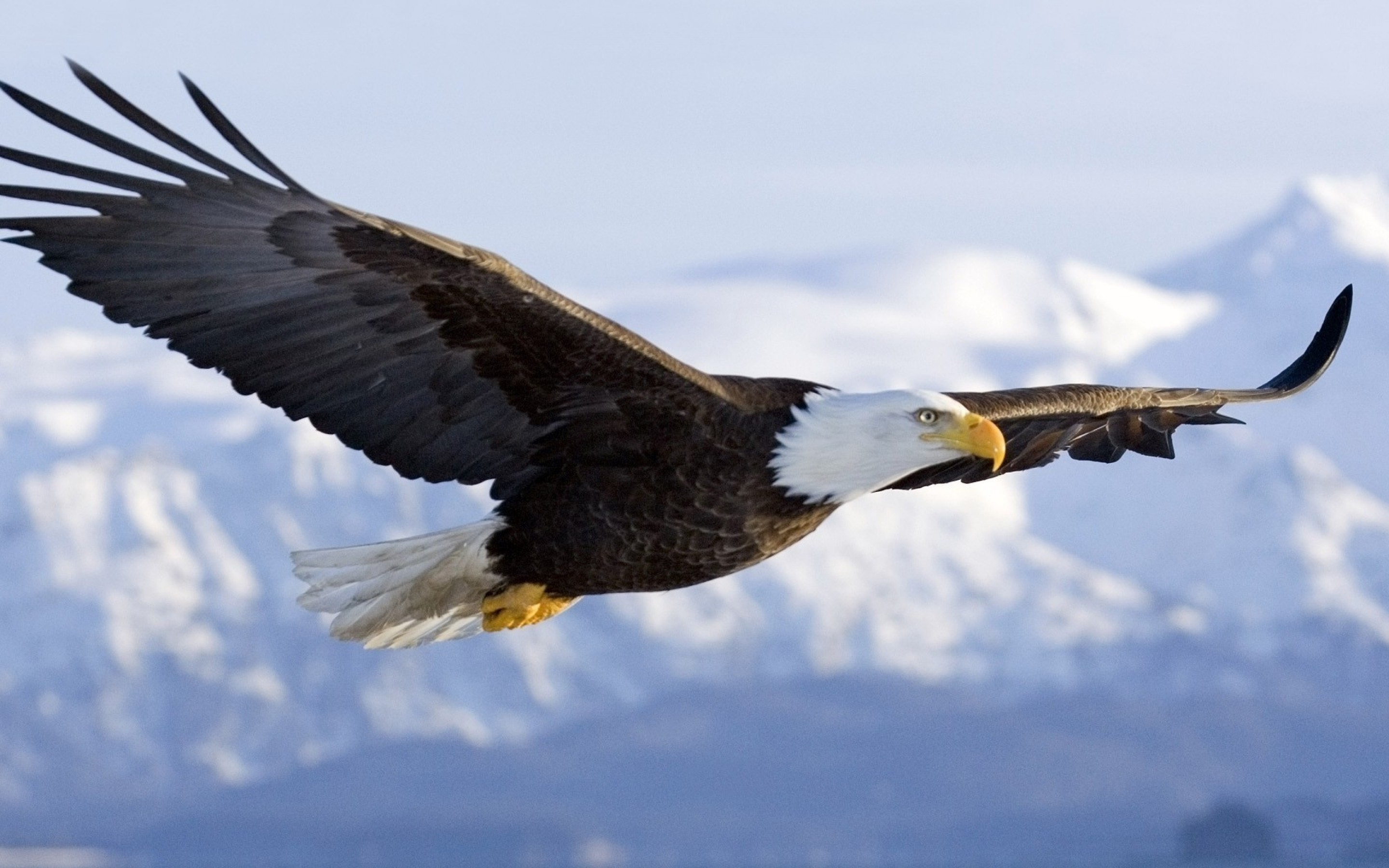 Highly Effective Habits of Eagles pgcps mess   Reform Sasscer 2880x1800
