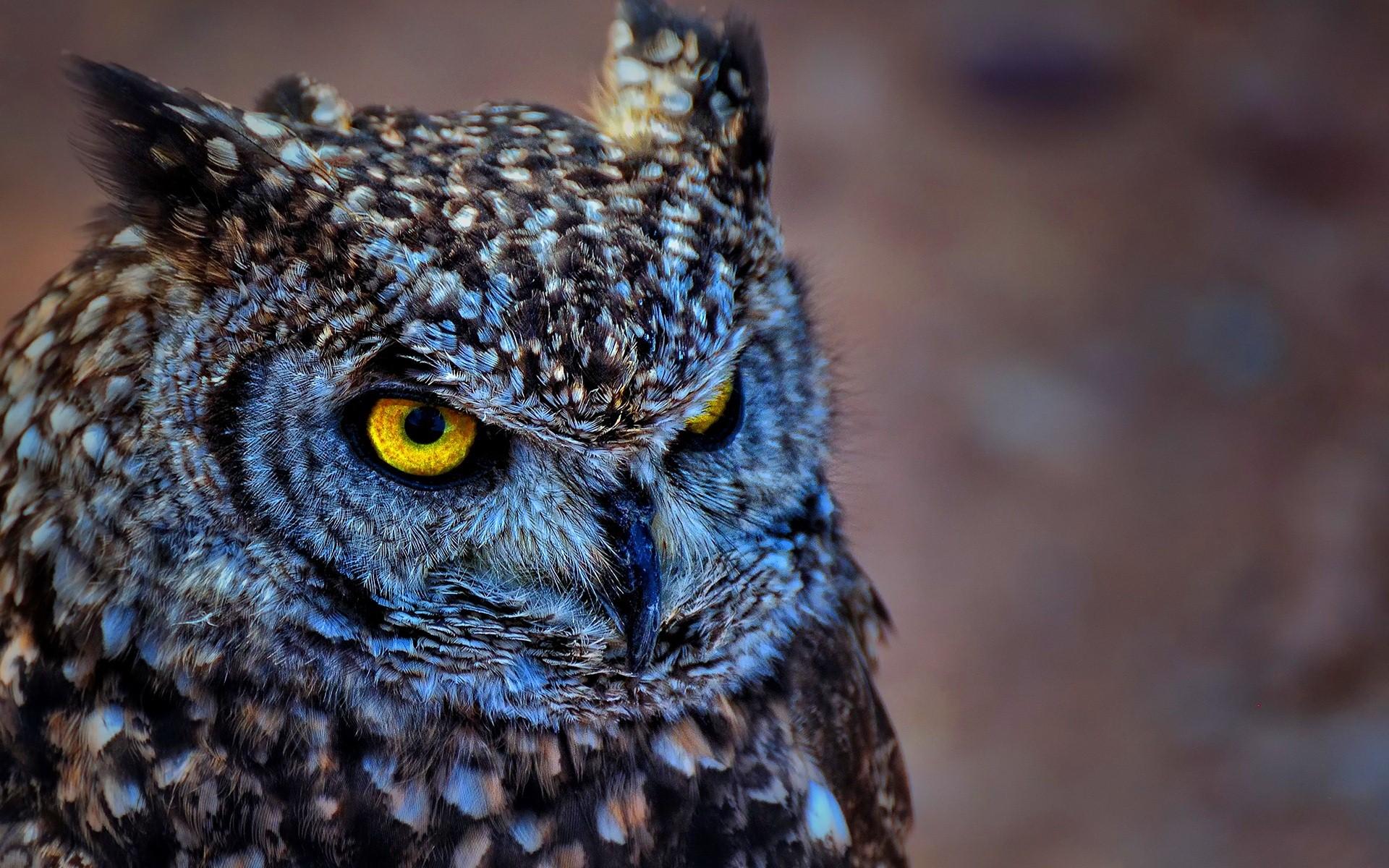 Owl Wallpapers 1080p 98J63S5   4USkY 1920x1200
