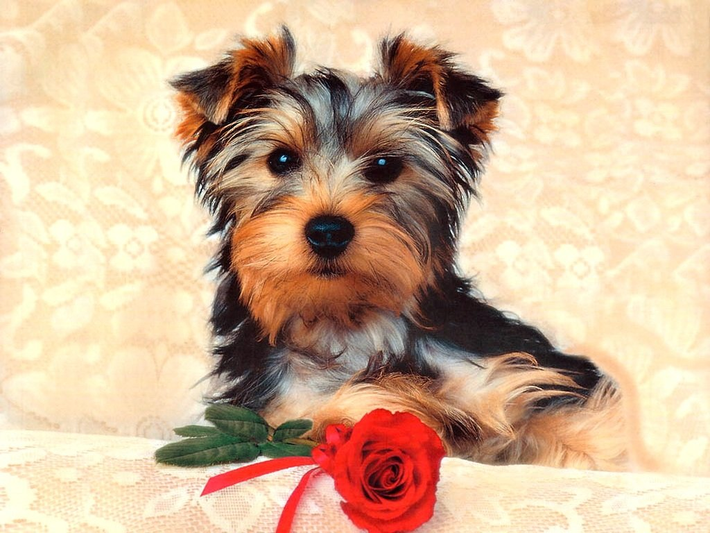 1024x768 Cute Dog desktop PC and Mac wallpaper 1024x768