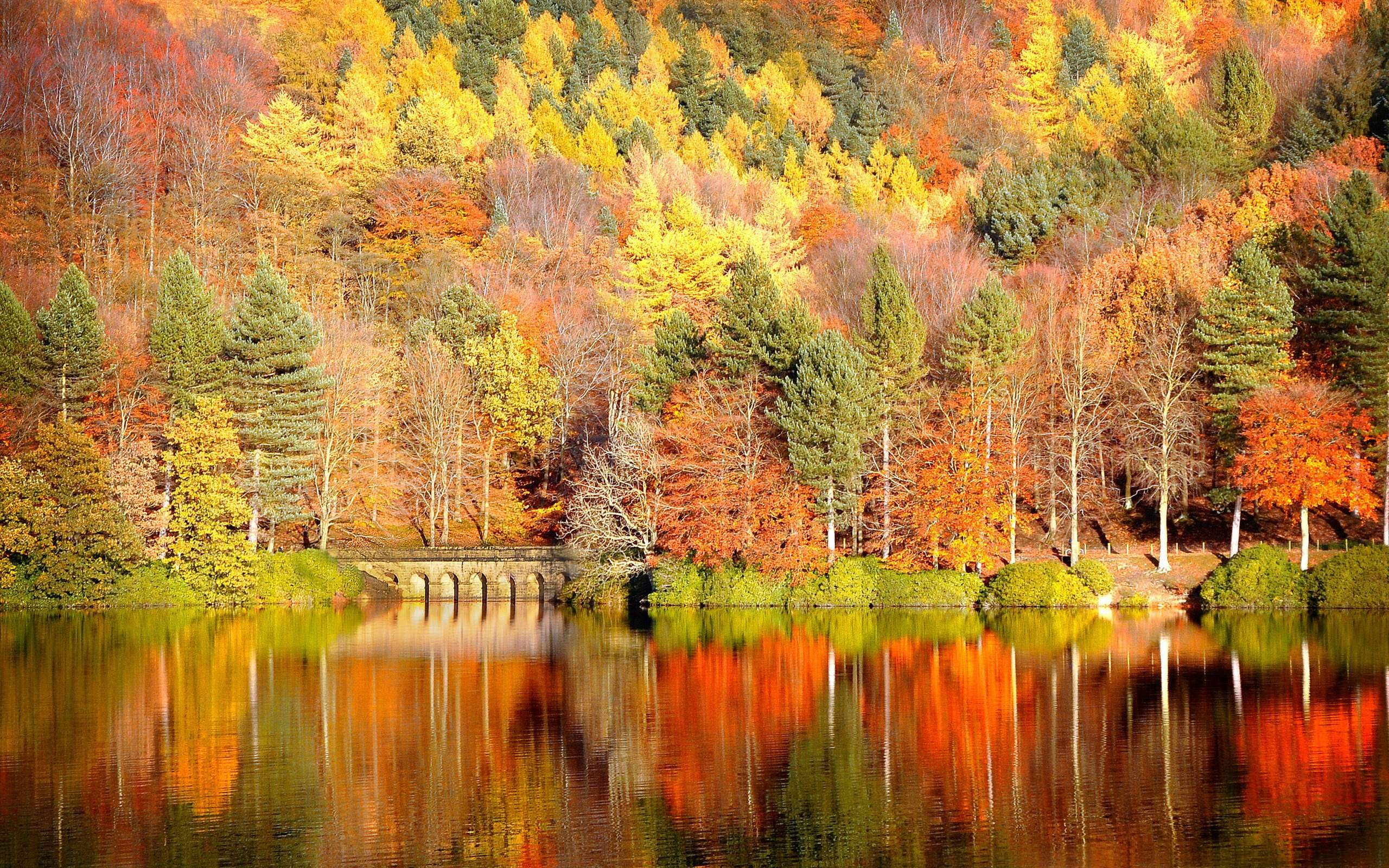 Download Fall Wallpaper wallpaper Fall In Colors 2560x1600