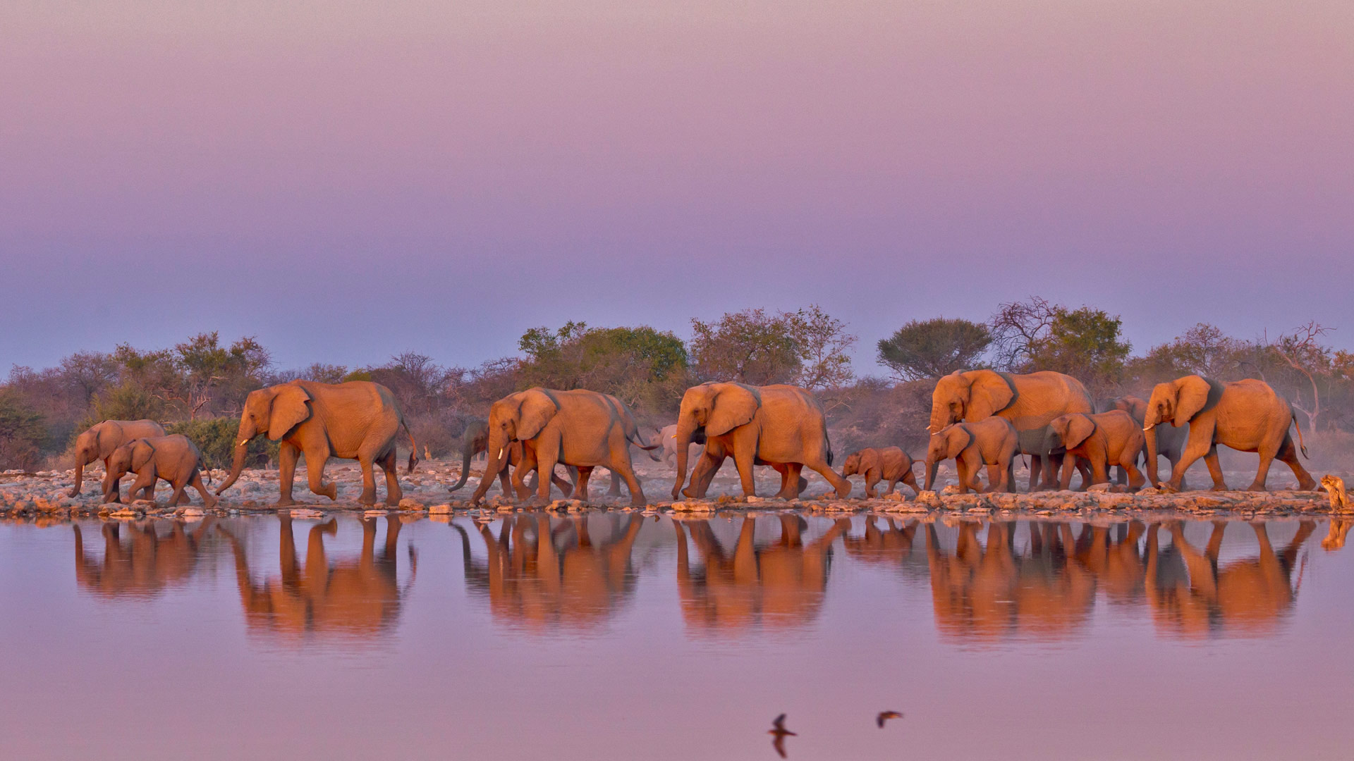 Elephant Parade Bing Wallpaper Download 1920x1080