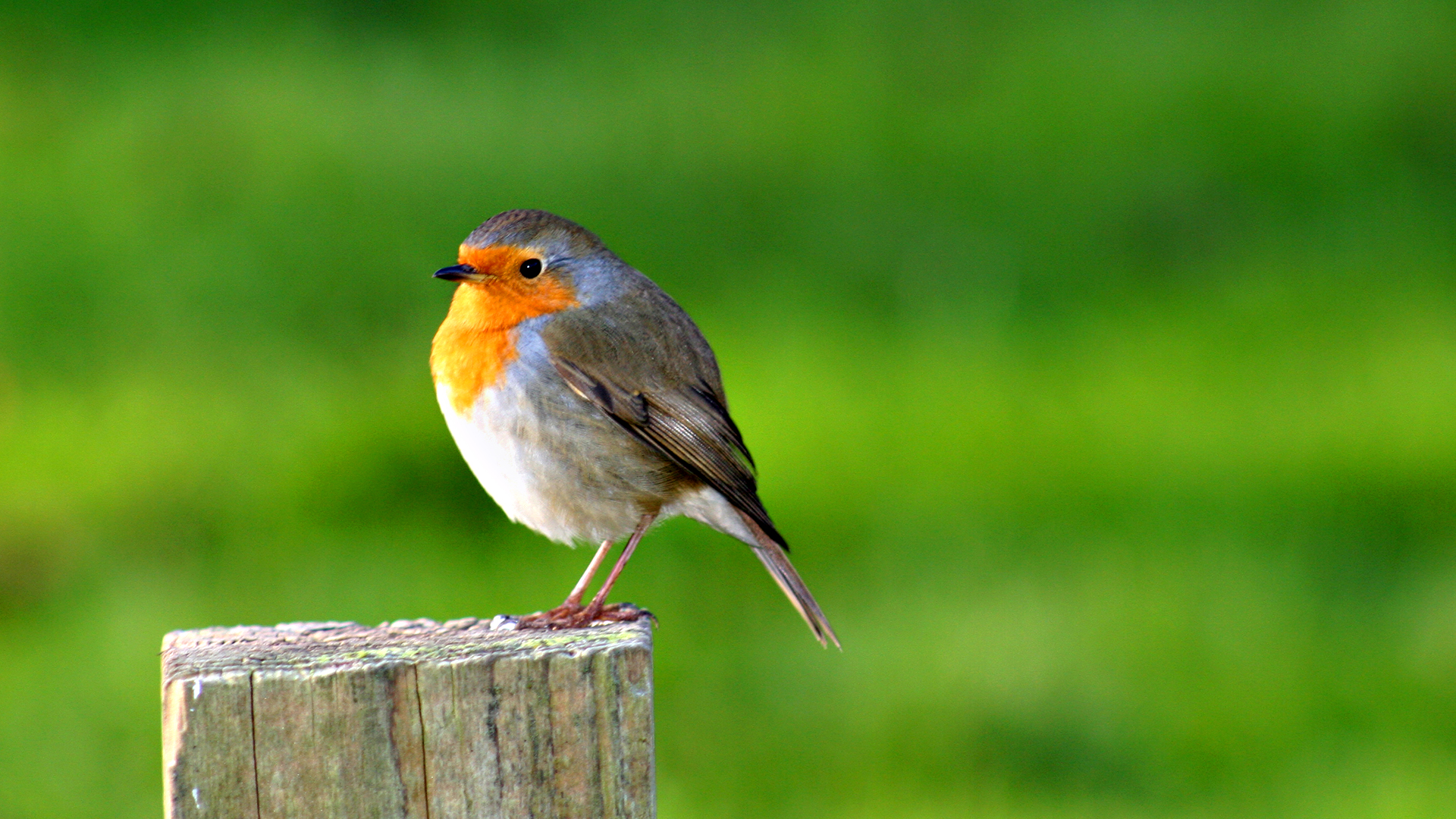 Bird Desktop Wallpapers FREE on Latorocom 1920x1080
