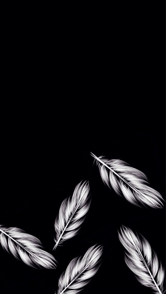 Free Download Feather Wallpaper For Iphone Black And White