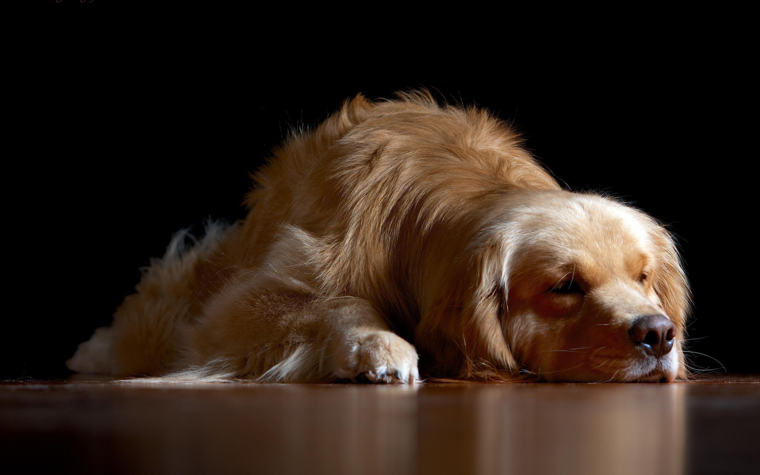 Sleeping Dog HD desktop wallpaper Widescreen High 2560x1600